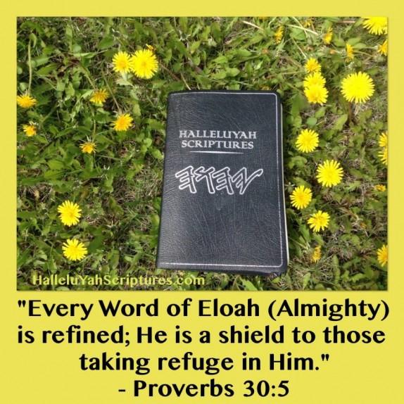 HalleluYah Scriptures Parallel + Hebrew Bible + Sacared Bible + Restored Name Bible + The Best Bible & Devine Name Bible + The Scriptures & Cepher Yahweh + Yahwah 574